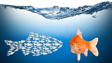 Fisch Schwarm Organize Team gemeinsam stark