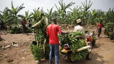 Bananentransport in Uganda