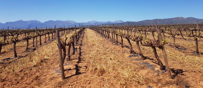 Weinfarm Leeuwenkuil in Südafrika